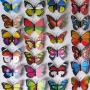 好看的蝴蝶_好看的蝴蝶价格_好看的蝴蝶图片_列表网