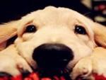 名犬繁殖直销1