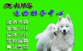 上海爱相随宠物火化服务站