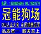 广东cku名犬繁殖基地