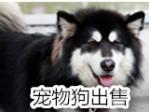 专业宠物店