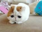 中华神汇猫舍