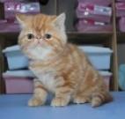 广东宠物猫狗