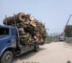 北京诚信园林绿化
