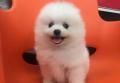 牡丹江宠物狗救助站
