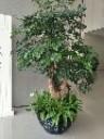 重慶庭院綠化