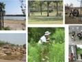 南汇葵园一日游 农家乐 骑马沙滩车户外活动 蔬菜采摘 食宿