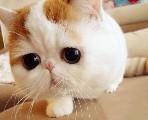 名盛良辰猫舍