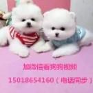广东正规狗场(广州总狗场)