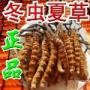 南通市收购冬虫夏草(断头过期长毛虫蛀发黑)同质同价