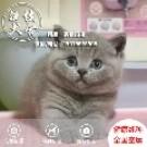 广州英短蓝猫出售-德佳猫舍