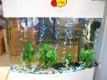 专业搬运鱼缸 免费安装 鱼缸清洗 消毒