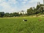 广州宠物别墅度假专业寄养