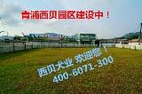 上海西贝犬业
