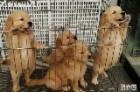 国际名犬基地