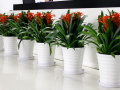 北京四季佳美花卉園藝公司