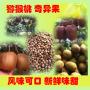 猕猴桃 华南和平猕猴桃基地 健康新鲜 大量批发