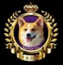 长期出售高品质宠物狗