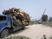 北京誠信園林綠化