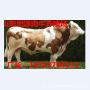 活驴多少钱一斤大驴多少钱一斤