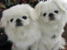 北京犬之聲寵物寄養訓練學校