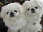 北京犬之声宠物寄养训练学校(宠物寄养训练)