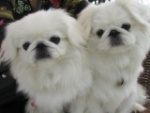 北京犬之声宠物寄养训练学校