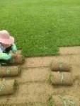 安徽草坪种植基地