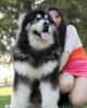 名扬犬业8