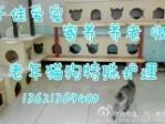 北京于佳宠物寄养 老年猫狗代替养老护理