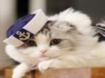 喵咪有约猫舍