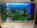 21世纪鱼缸水族维护公司