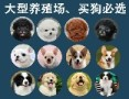 广东买狗首选 CKU认证犬舍 品牌保障 放心购犬