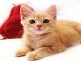 旭美尚品猫舍
