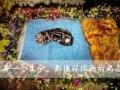 武汉宠物殡葬