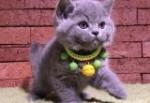 名猫宠物馆1