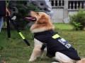 汪旺城宠物训练寄养基地