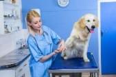 深圳哪家宠物医院可以上门服务