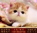 深圳哪里有卖猫   猫朋狗友养殖场