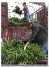 成都绿篱园艺
