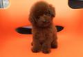 凉山宠物狗出售