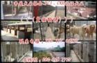 广州皇族犬业有限公司