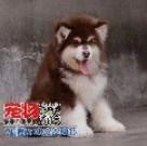 广东宠物养殖