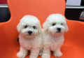 台州哪里买狗靠谱点