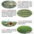 北京金潍多采摘园