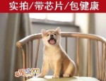 宠之恋犬舍(中山正规犬舍)