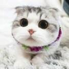 盛心致美猫舍