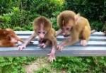石猴繁殖基地
