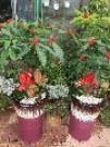 泉州绿源花卉
