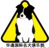 广东华通犬舍